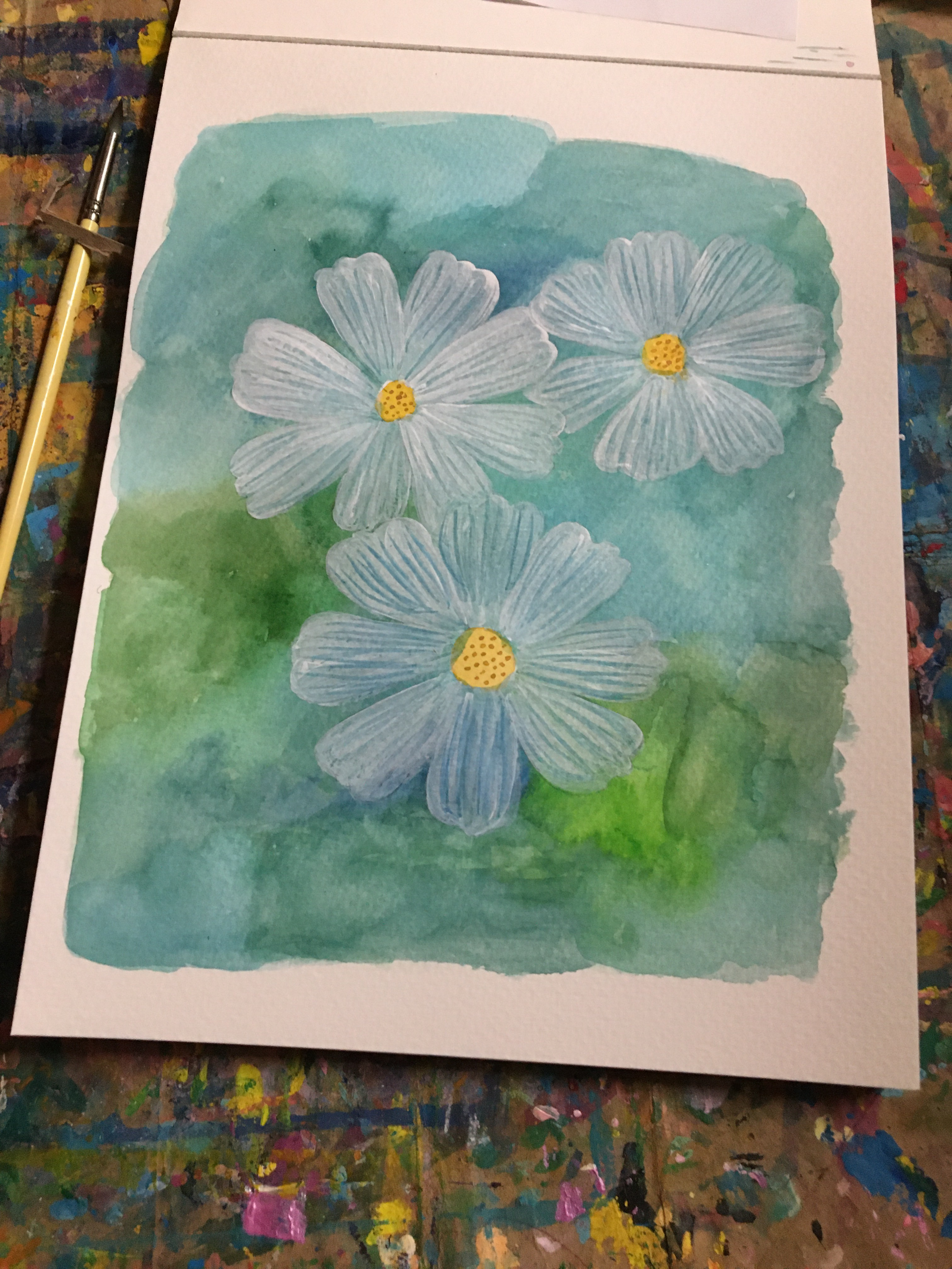 Three white cosmos painted on a blue green watercolor wash for you